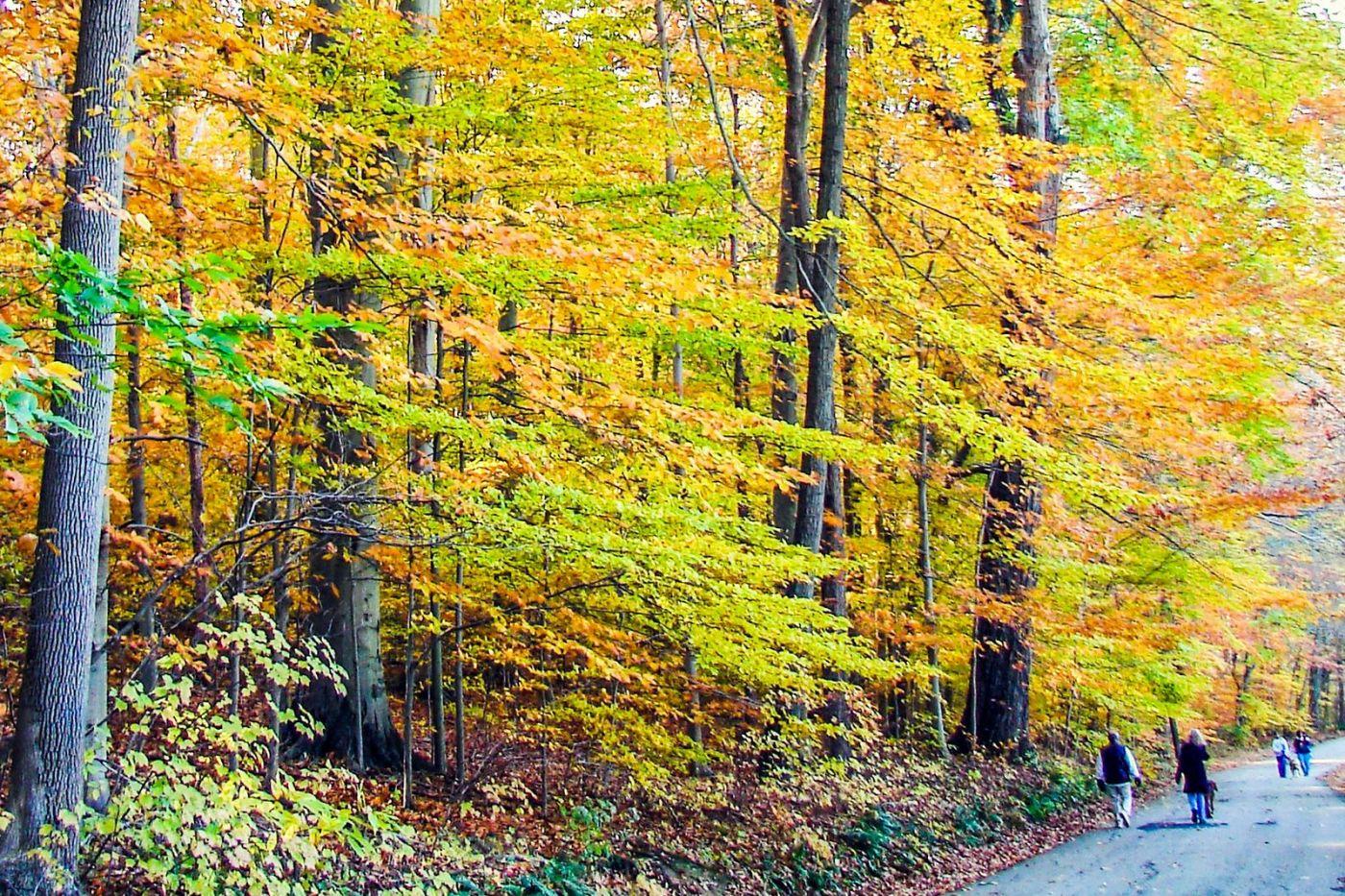 宾州雷德利克里克公园(Ridley creek park),糊涂的爱_图1-3