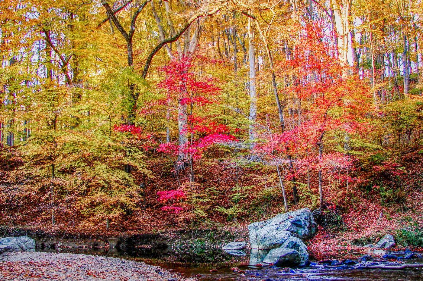 宾州雷德利克里克公园(Ridley creek park),糊涂的爱_图1-1