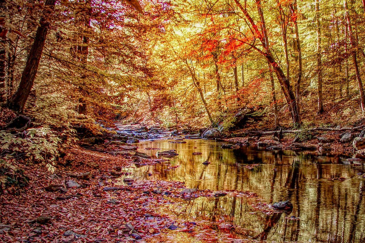 宾州雷德利克里克公园(Ridley creek park),糊涂的爱_图1-13