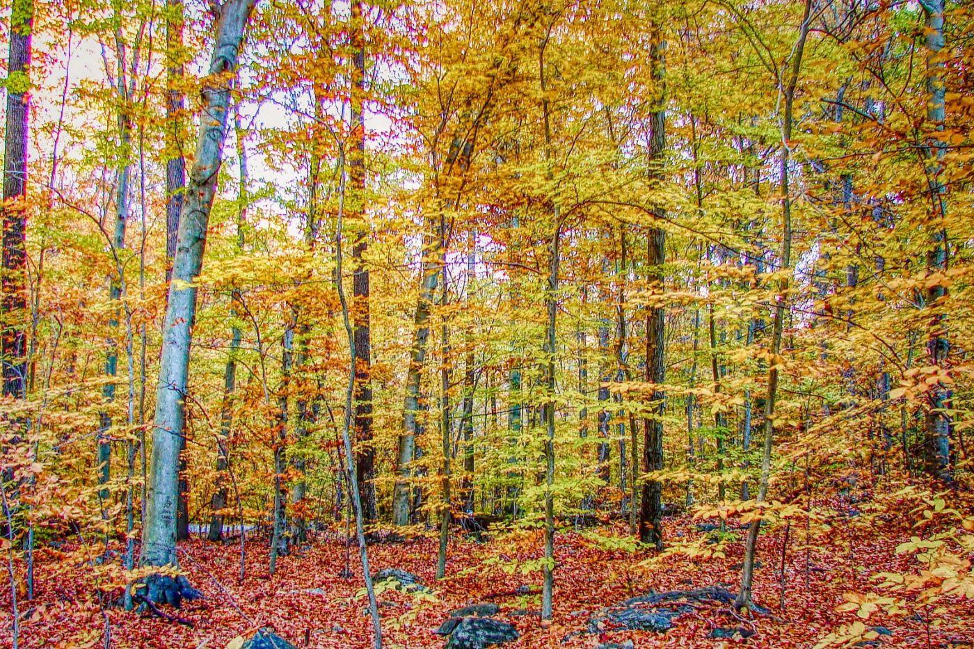 宾州雷德利克里克公园(Ridley creek park),糊涂的爱_图1-19