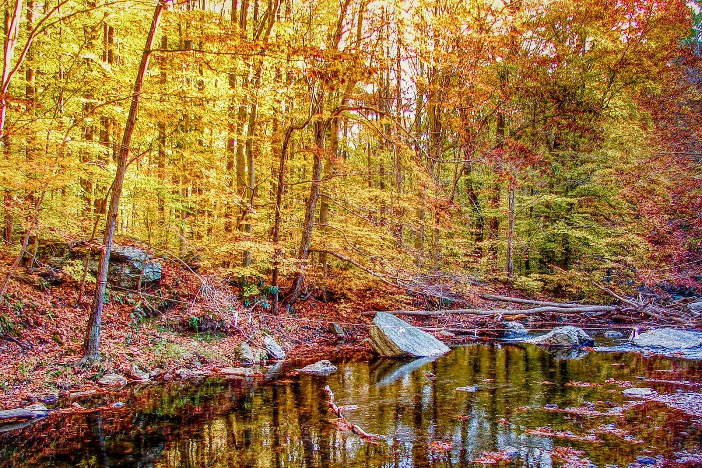宾州雷德利克里克公园(Ridley creek park),糊涂的爱_图1-20