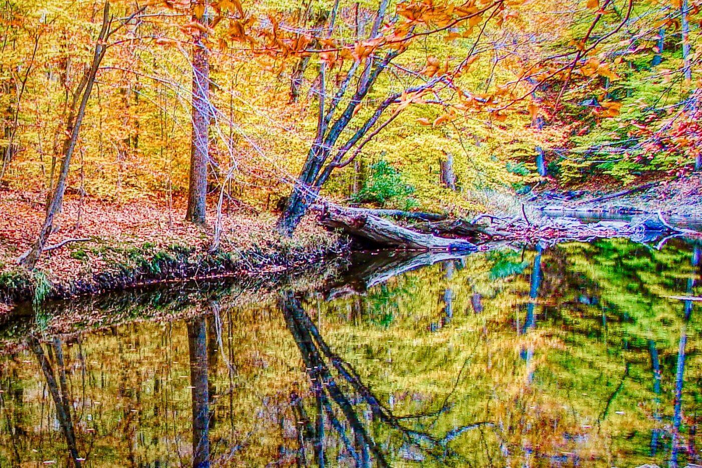 宾州雷德利克里克公园(Ridley creek park),糊涂的爱_图1-18
