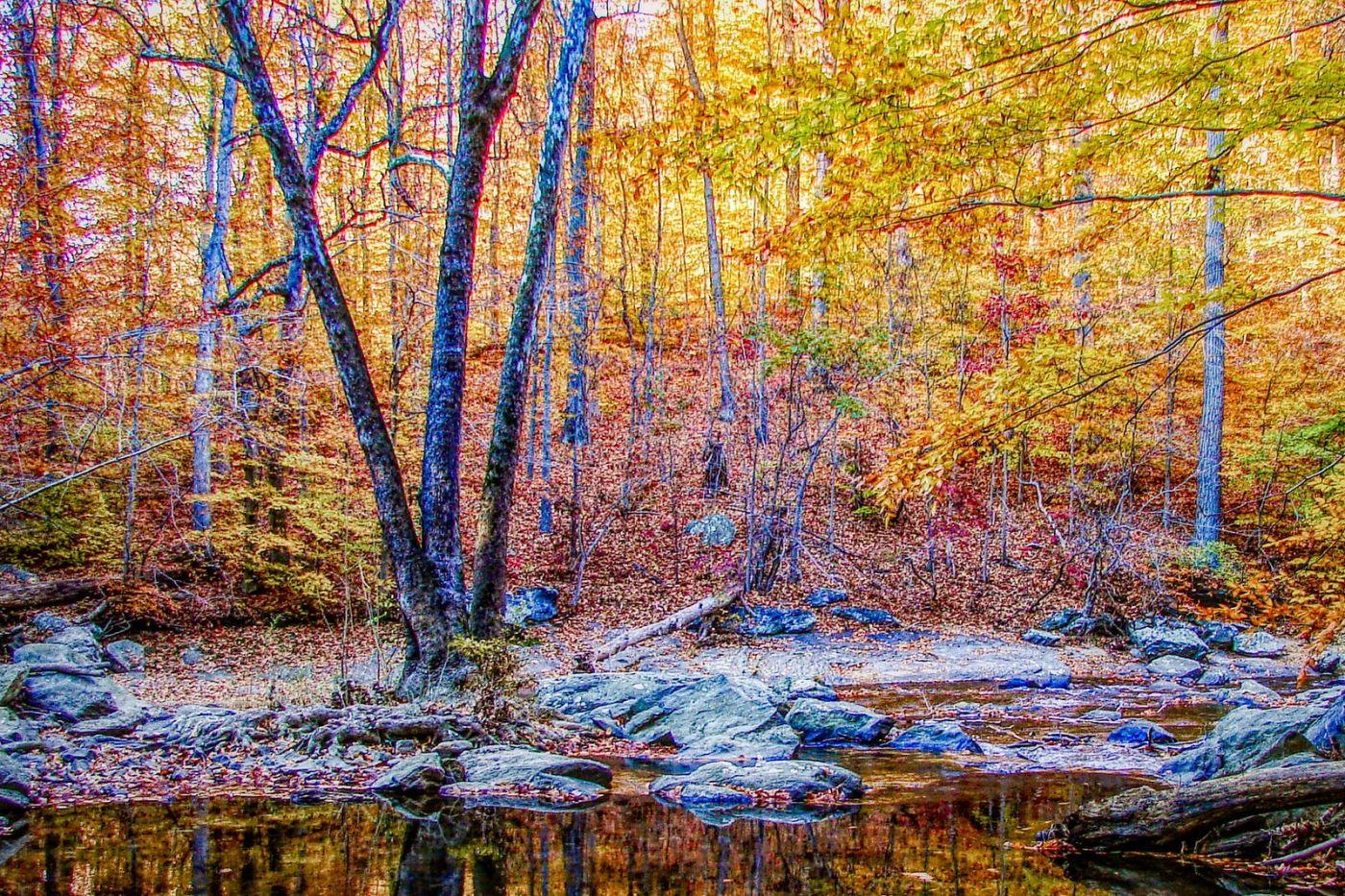 宾州雷德利克里克公园(Ridley creek park),糊涂的爱_图1-21