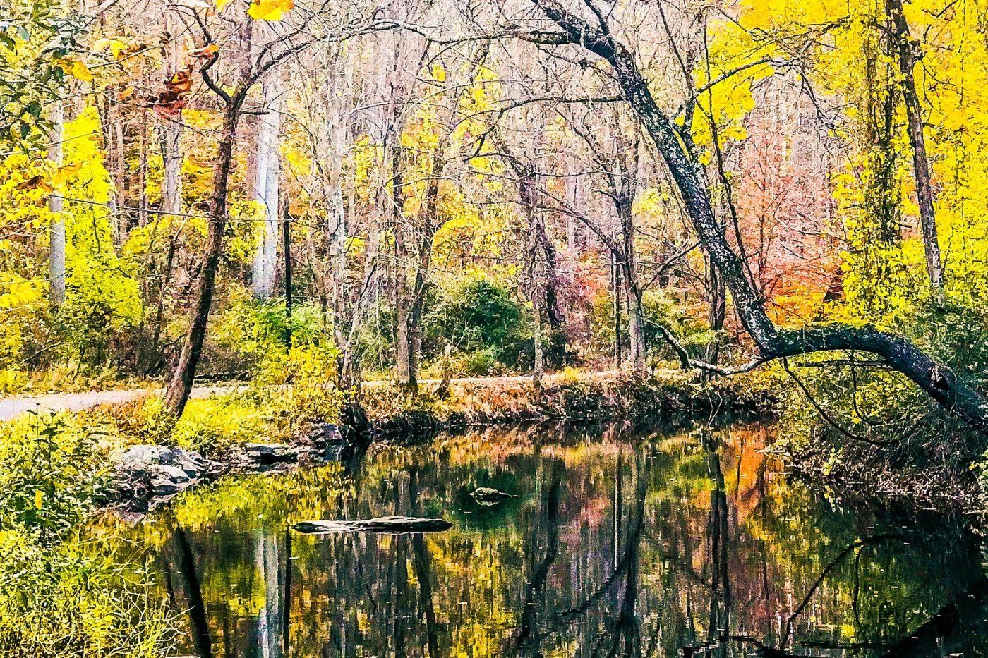 宾州雷德利克里克公园(Ridley creek park),糊涂的爱_图1-17