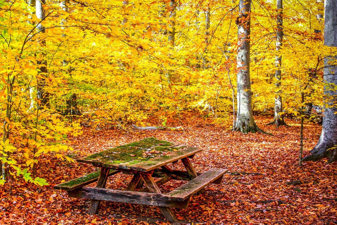 宾州雷德利克里克公园(Ridley creek park),糊涂的爱_图1-22