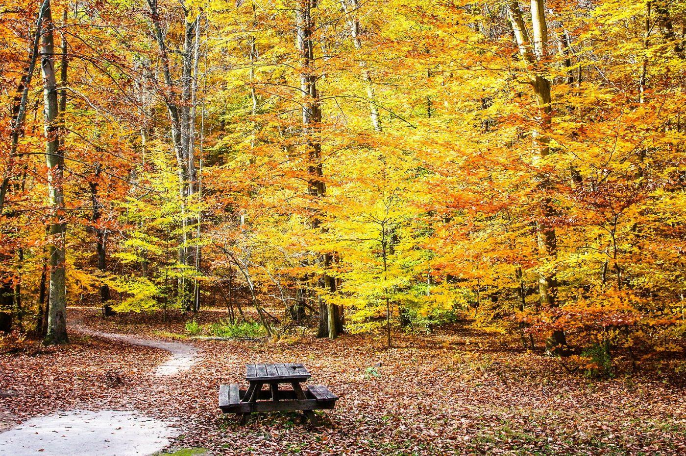 宾州雷德利克里克公园(Ridley creek park),糊涂的爱_图1-27