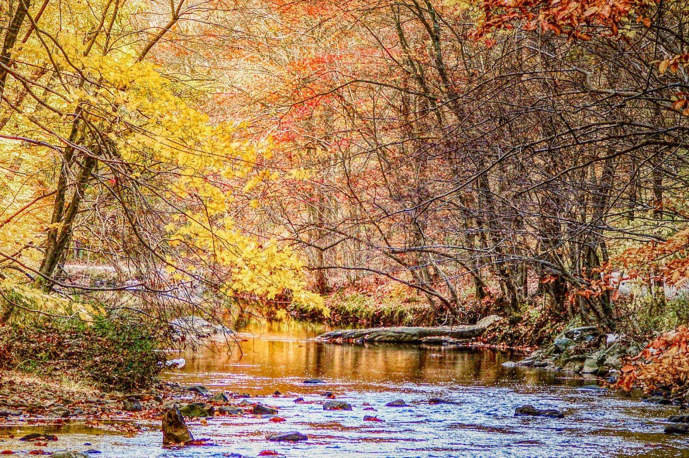 宾州雷德利克里克公园(Ridley creek park),糊涂的爱_图1-26