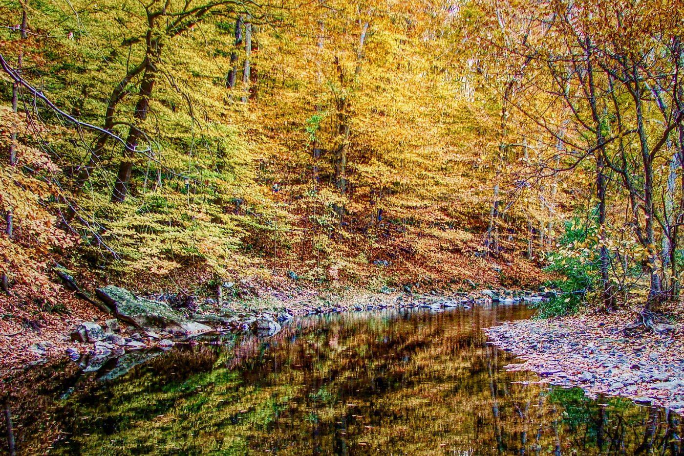 宾州雷德利克里克公园(Ridley creek park),糊涂的爱_图1-25