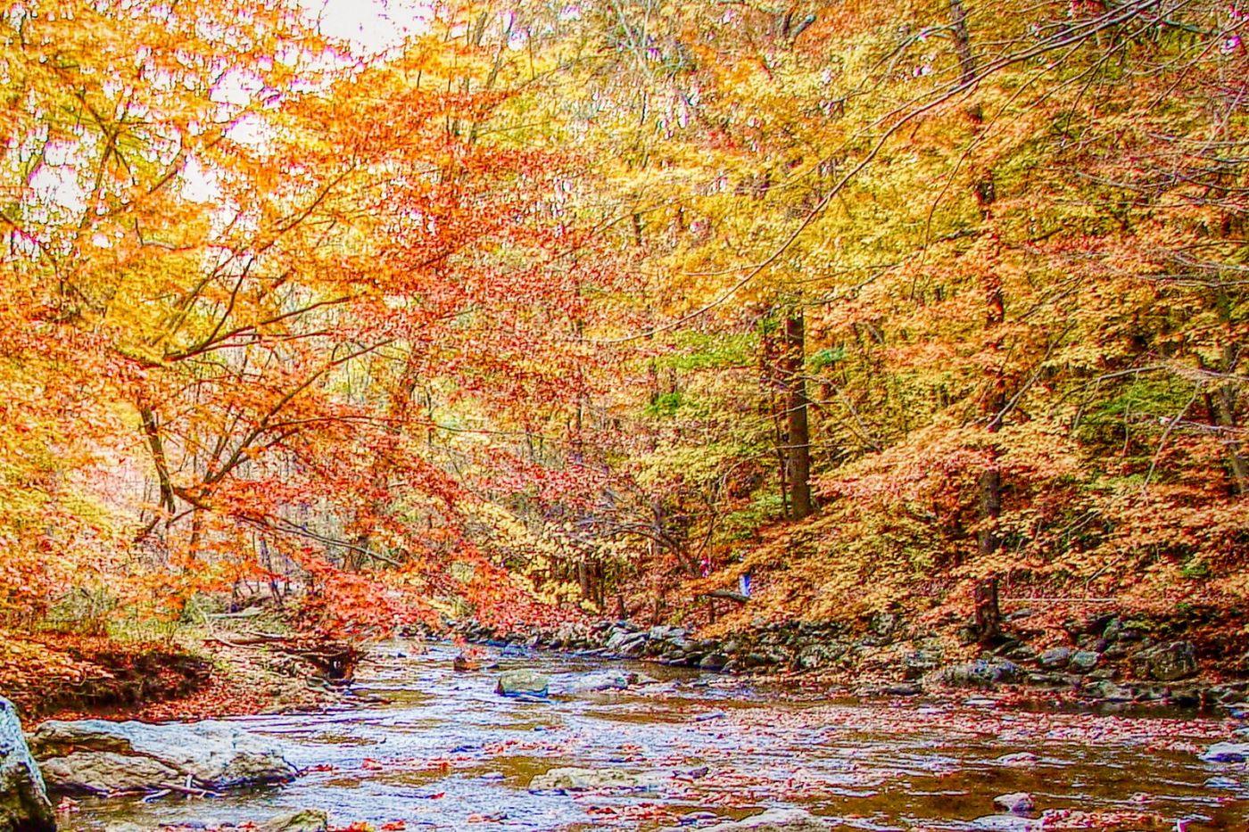 宾州雷德利克里克公园(Ridley creek park),糊涂的爱_图1-29
