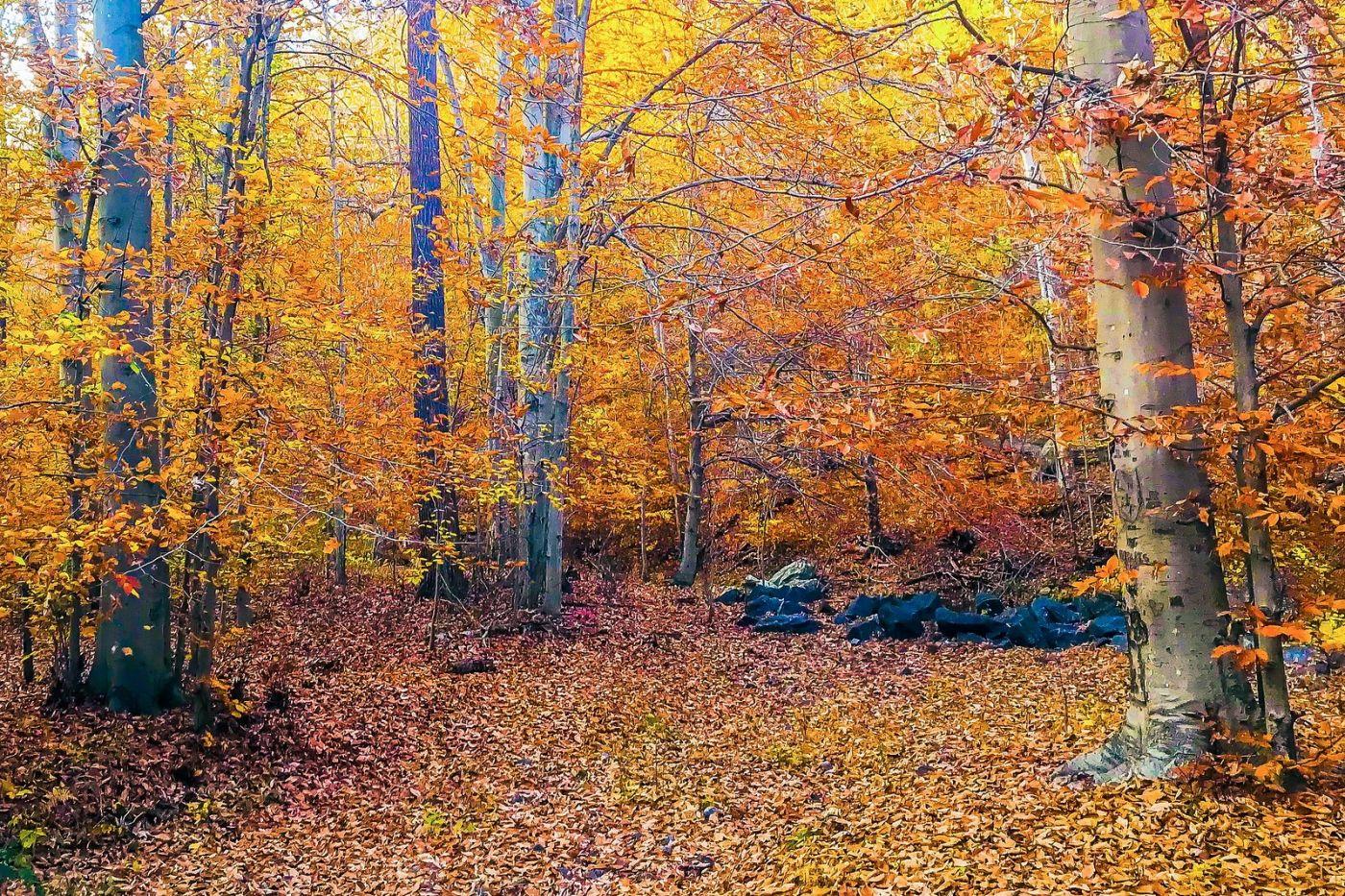 宾州雷德利克里克公园(Ridley creek park),糊涂的爱_图1-31