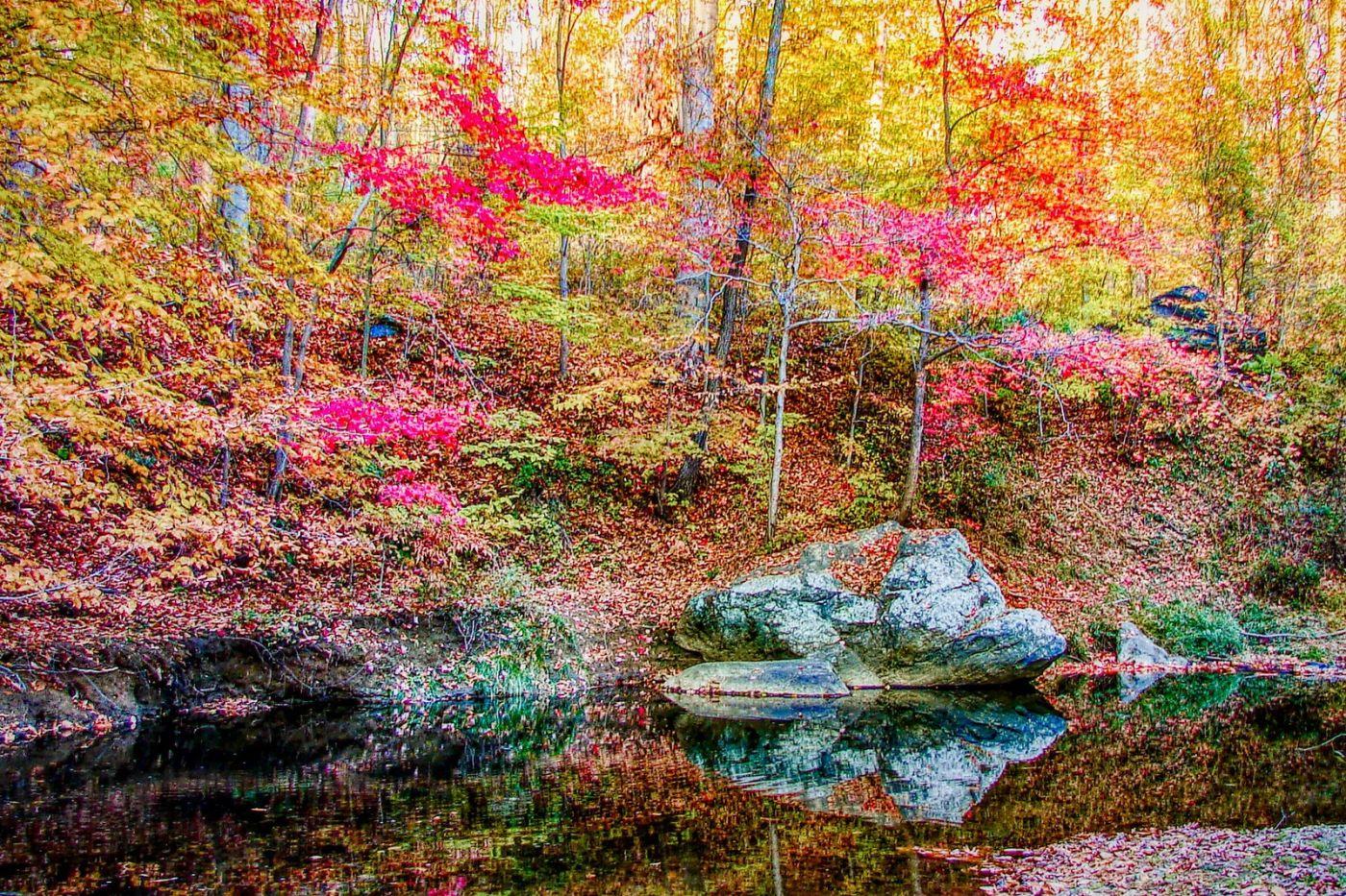 宾州雷德利克里克公园(Ridley creek park),糊涂的爱_图1-33