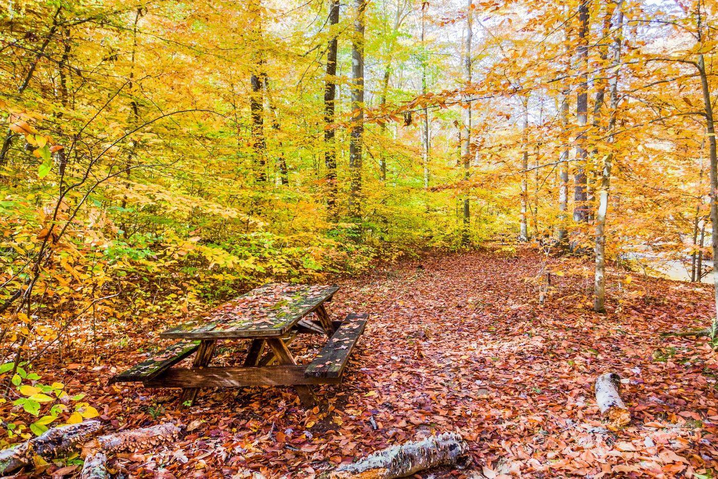 宾州雷德利克里克公园(Ridley creek park),糊涂的爱_图1-35