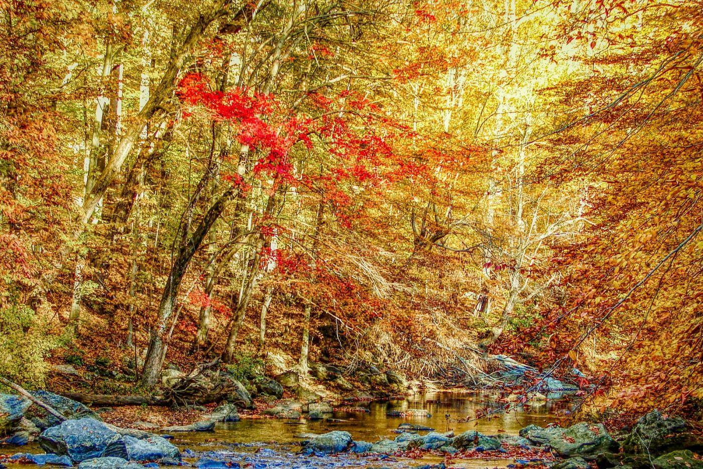 宾州雷德利克里克公园(Ridley creek park),糊涂的爱_图1-34