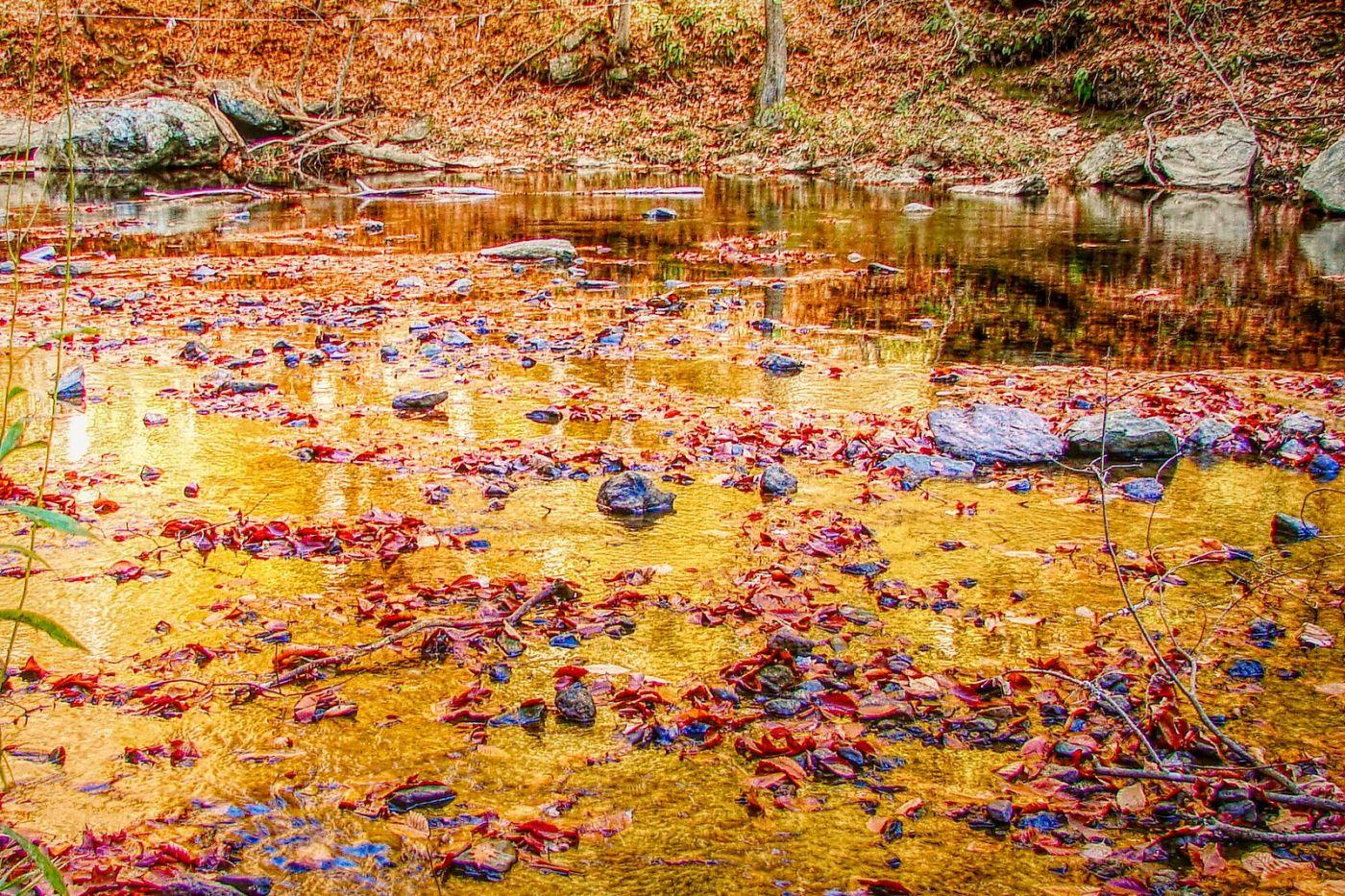 宾州雷德利克里克公园(Ridley creek park),糊涂的爱_图1-39