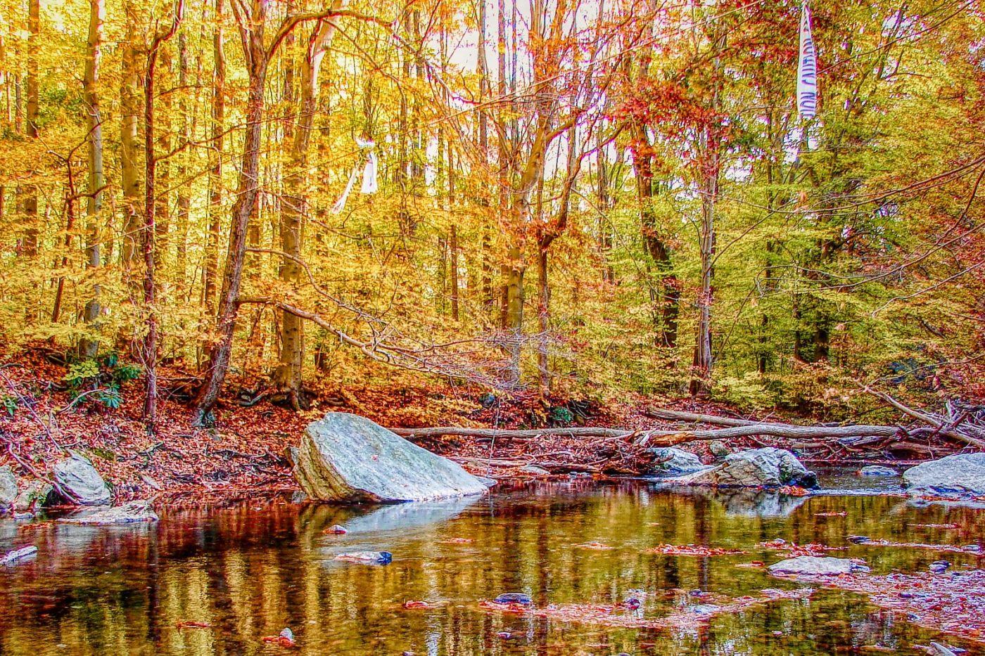 宾州雷德利克里克公园(Ridley creek park),糊涂的爱_图1-37