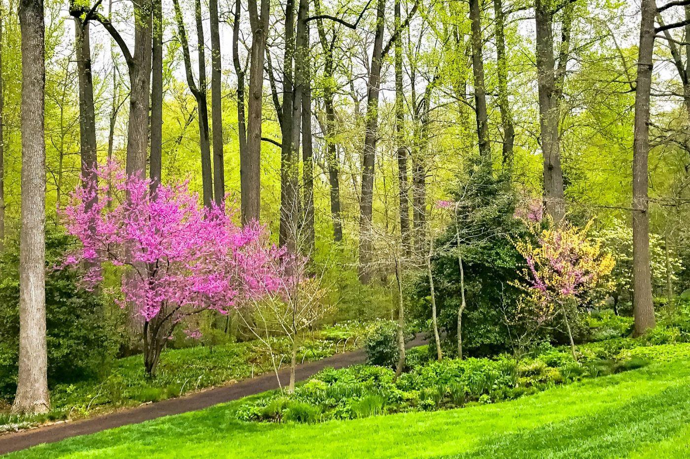Chanticleer花园,点亮心灵_图1-15