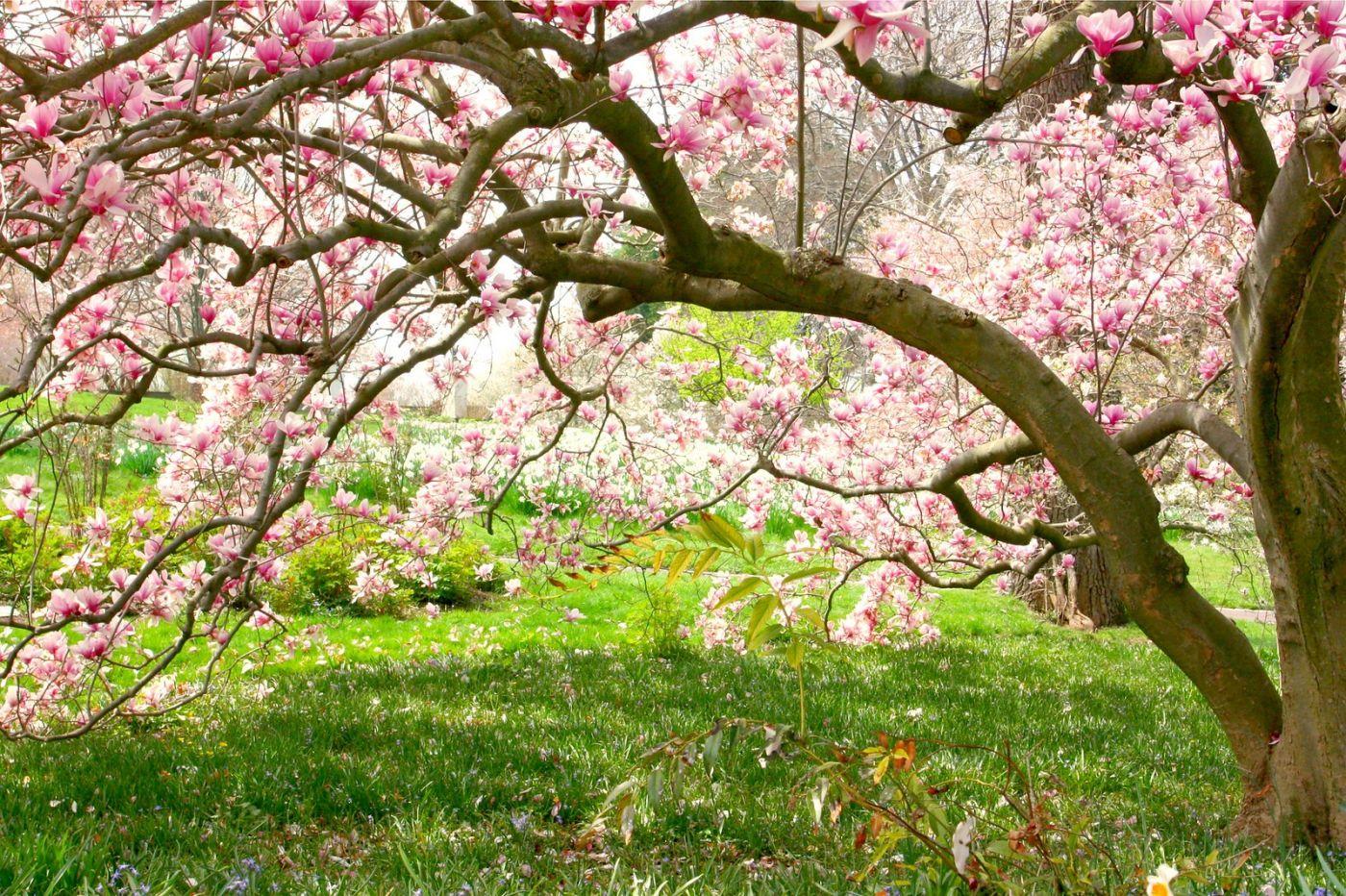 Chanticleer花园,点亮心灵_图1-9