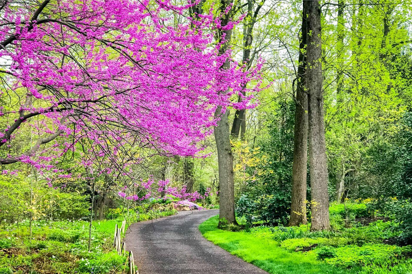 Chanticleer花园,点亮心灵_图1-5