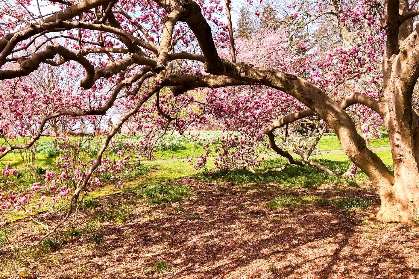 Chanticleer花园,点亮心灵_图1-20