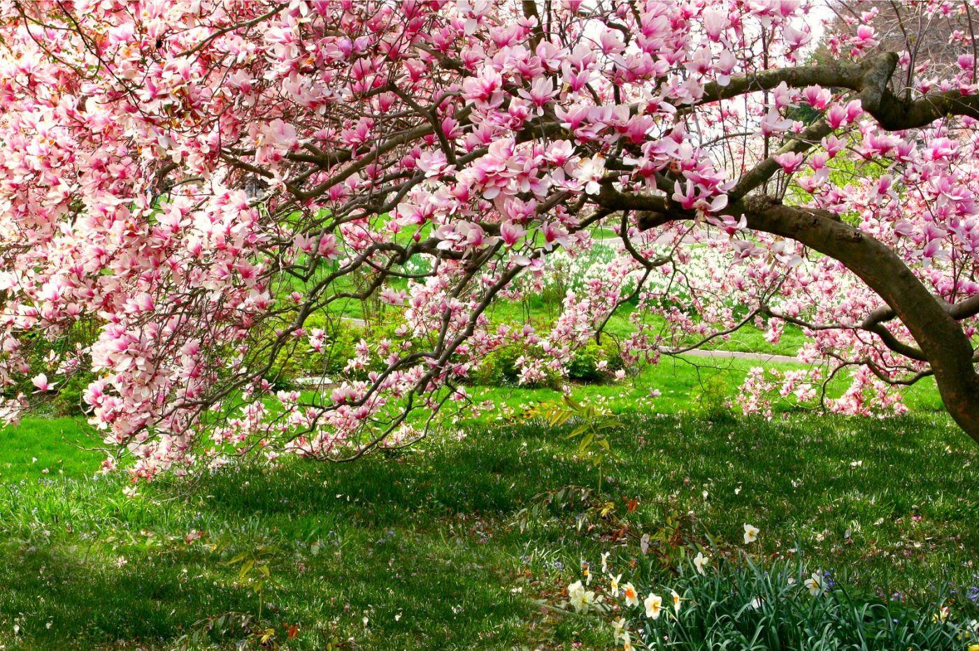 Chanticleer花园,点亮心灵_图1-36