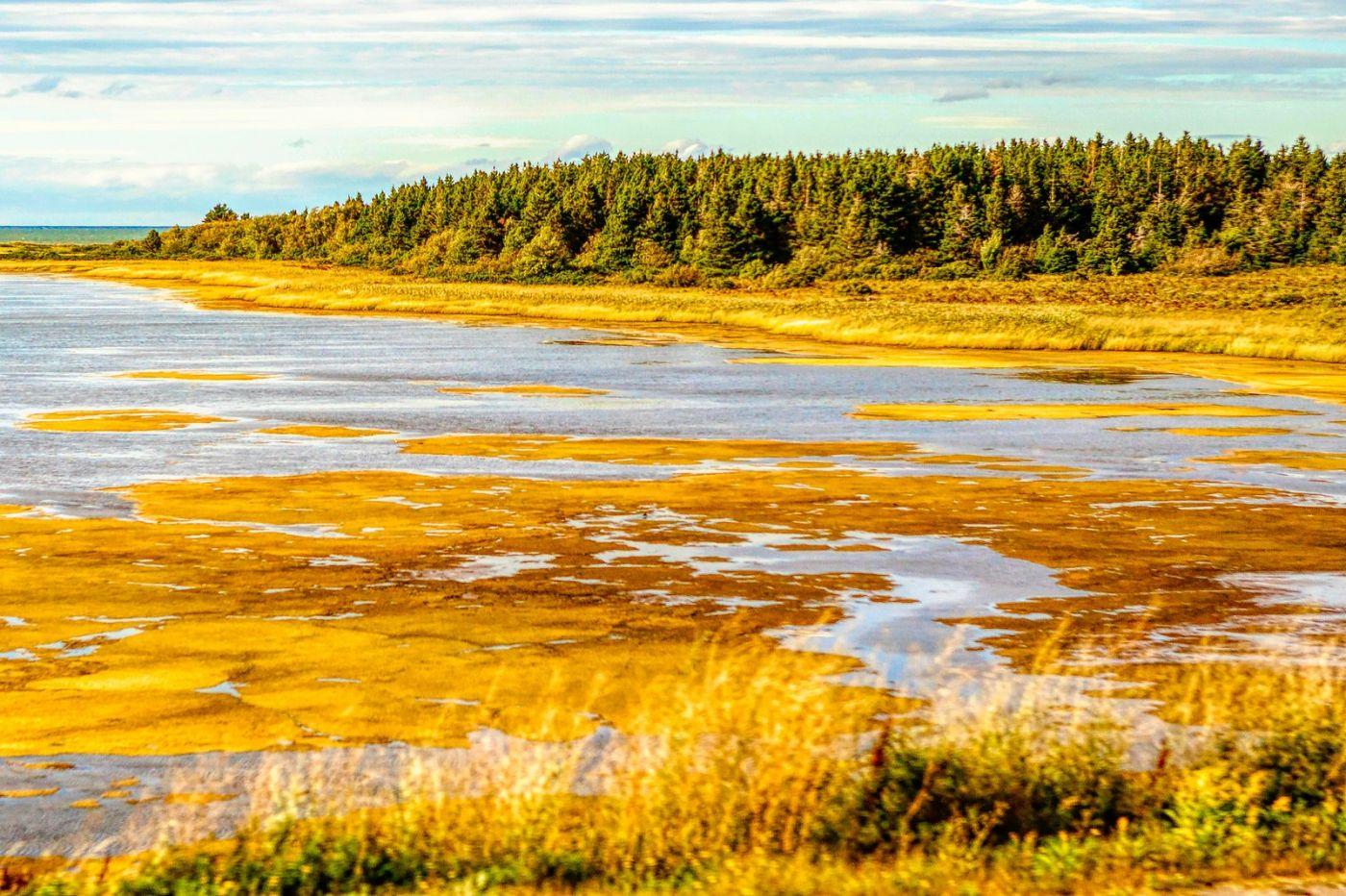加拿大路途,水边抓拍_图1-30