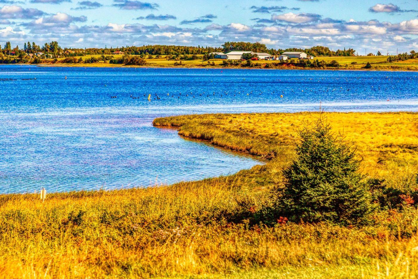 加拿大路途,水边抓拍_图1-36