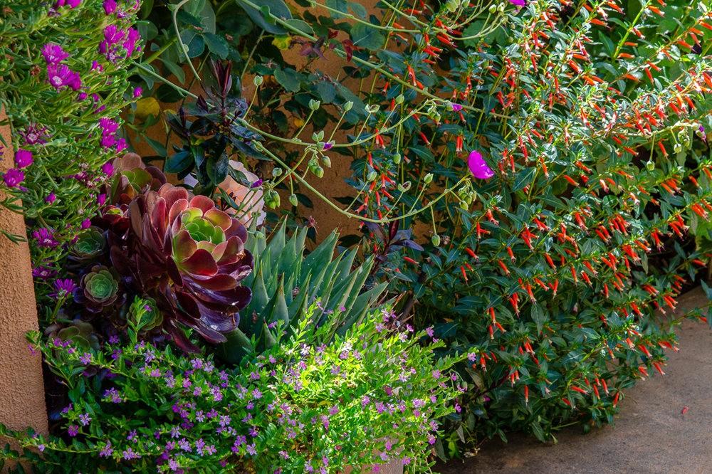 波特兰利奇植物园---2_图1-3