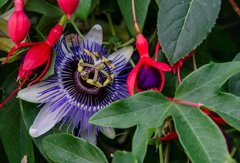 波特兰利奇植物园---2_图1-8