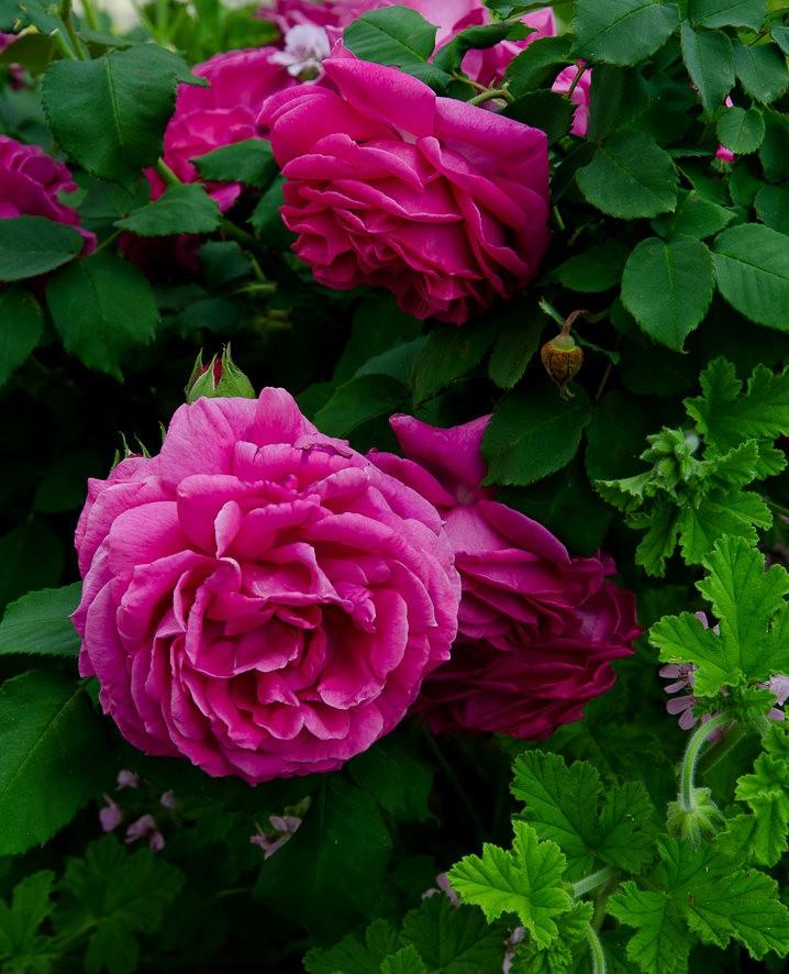 波特兰利奇植物园---2_图1-9