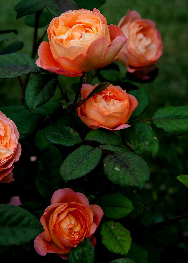 波特兰利奇植物园---2_图1-10