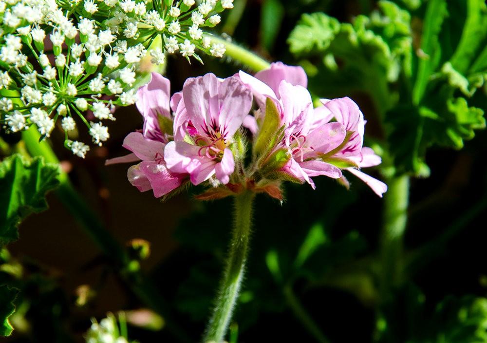 波特兰利奇植物园---2_图1-12
