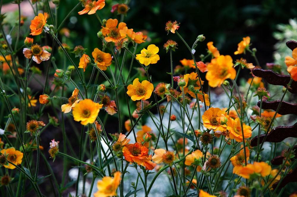 波特兰利奇植物园---2_图1-14
