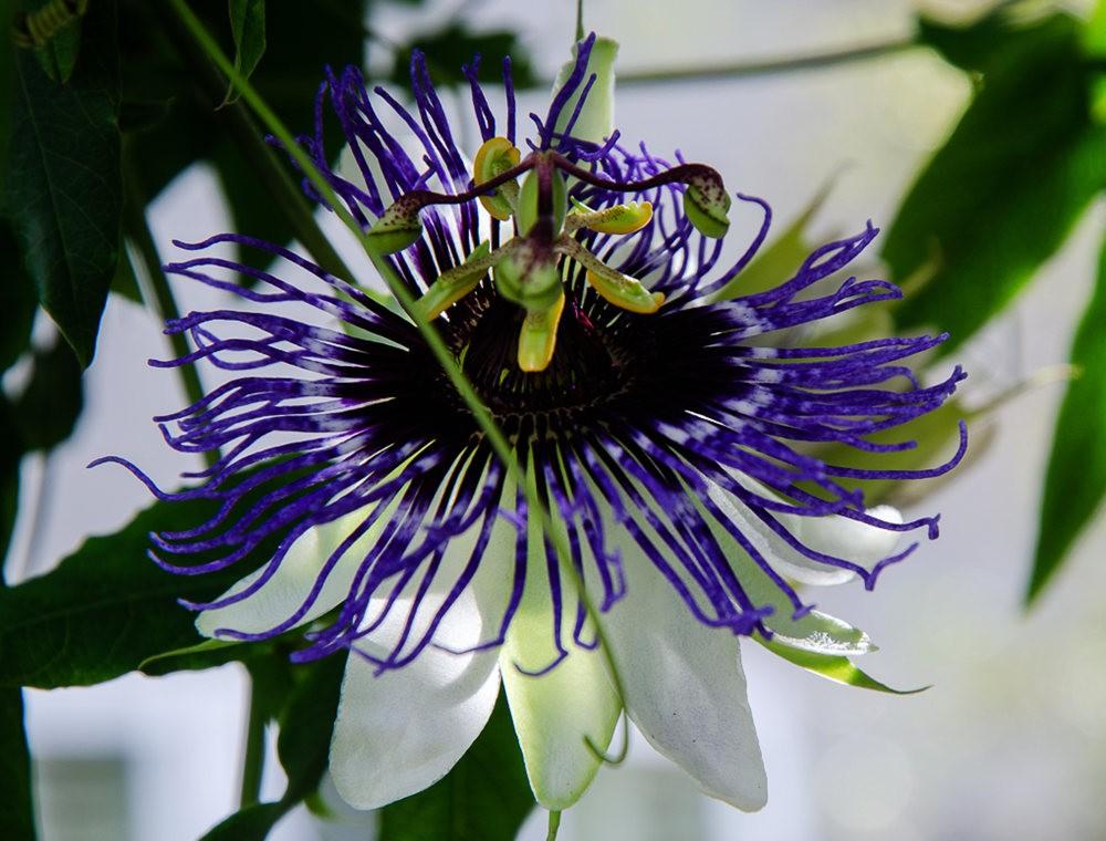 波特兰利奇植物园---2_图1-15