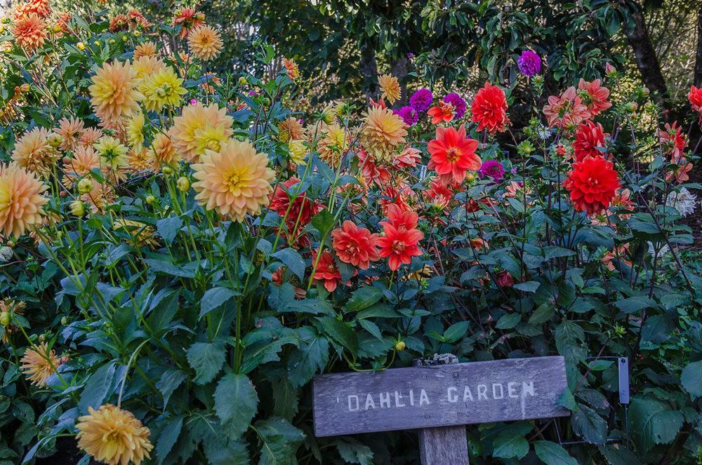 波特兰利奇植物园---2_图1-16