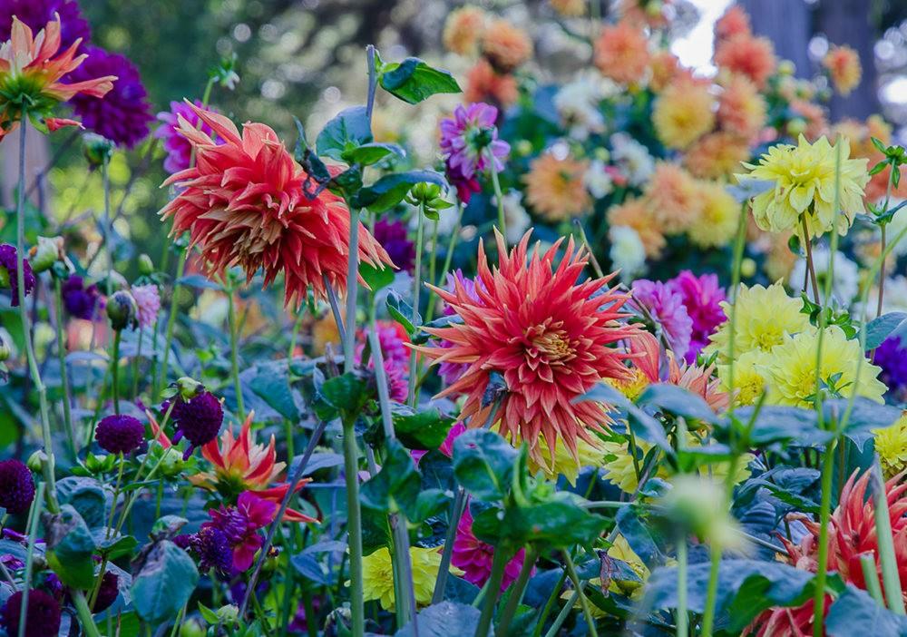 波特兰利奇植物园---2_图1-17