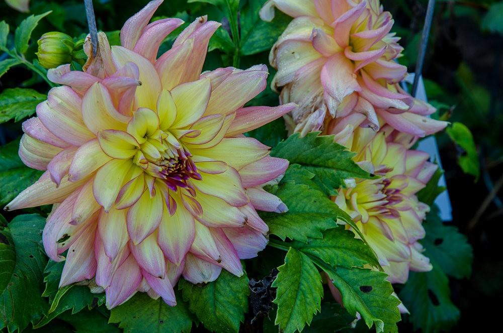 波特兰利奇植物园---2_图1-20