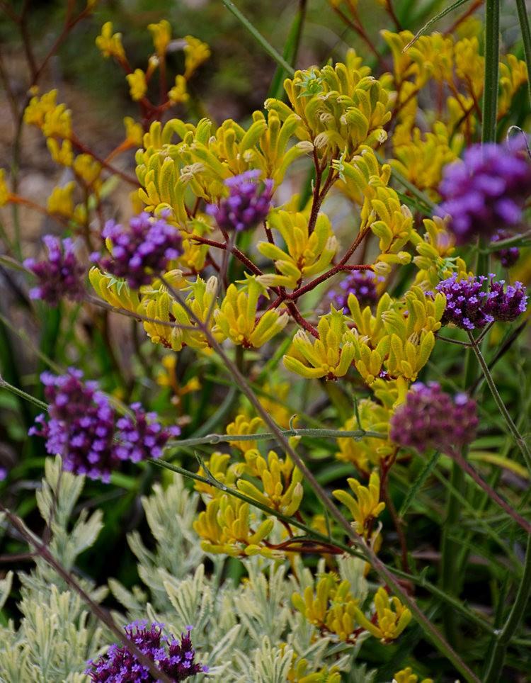 波特兰利奇植物园---2_图1-23