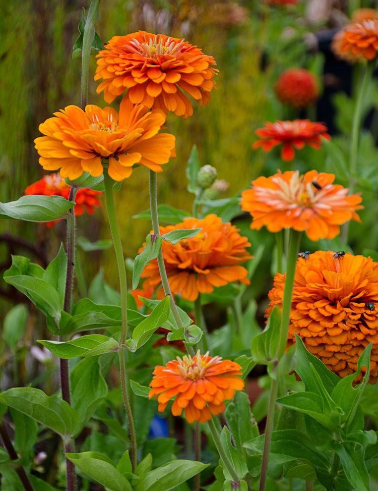 波特兰利奇植物园---2_图1-24