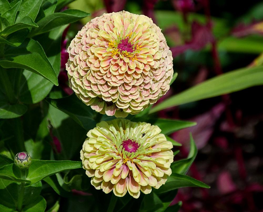 波特兰利奇植物园---2_图1-25