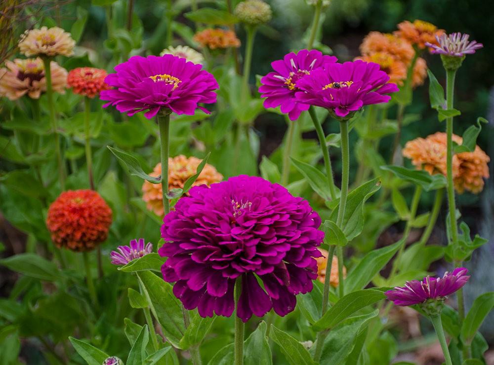 波特兰利奇植物园---2_图1-26