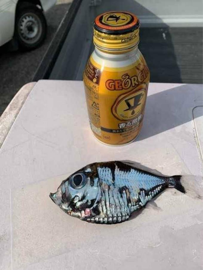 日本渔民捕获一条罕见深海鱼:可怕又美丽 越看越入迷_图1-2