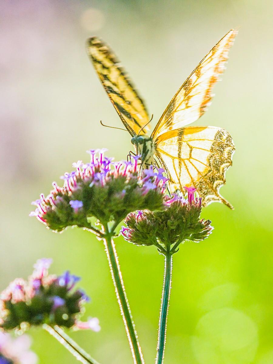 花的天使_图1-2