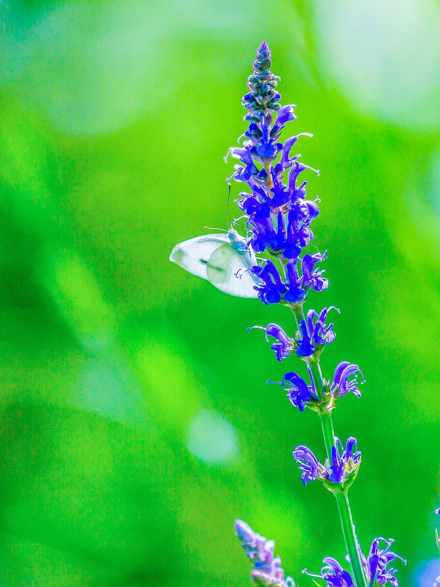 花的天使_图1-3