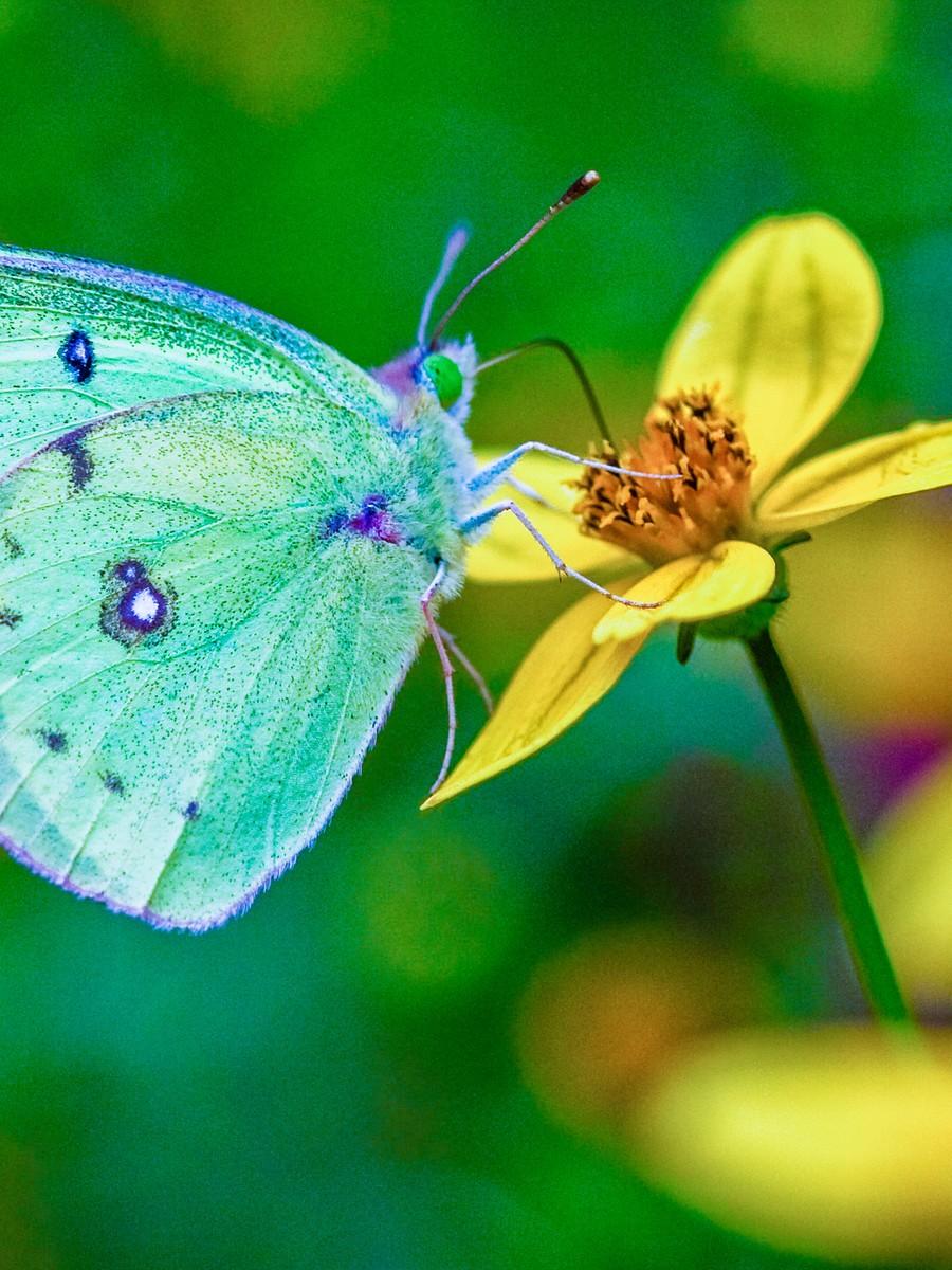 花的天使_图1-37