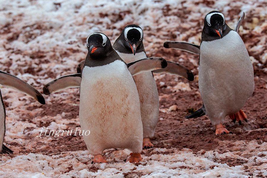 【小虫摄影】南极摄影_图1-4