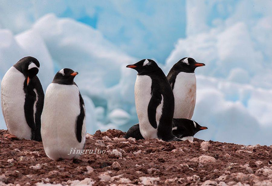 【小虫摄影】南极摄影_图1-2