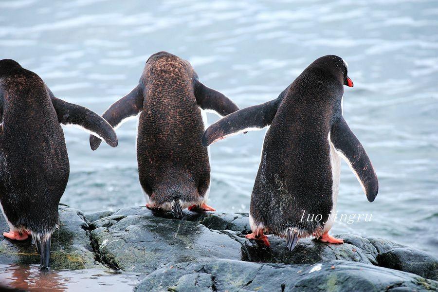 【小虫摄影】南极摄影_图1-11