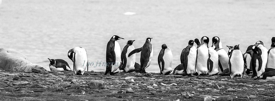 【小虫摄影】南极摄影_图1-12