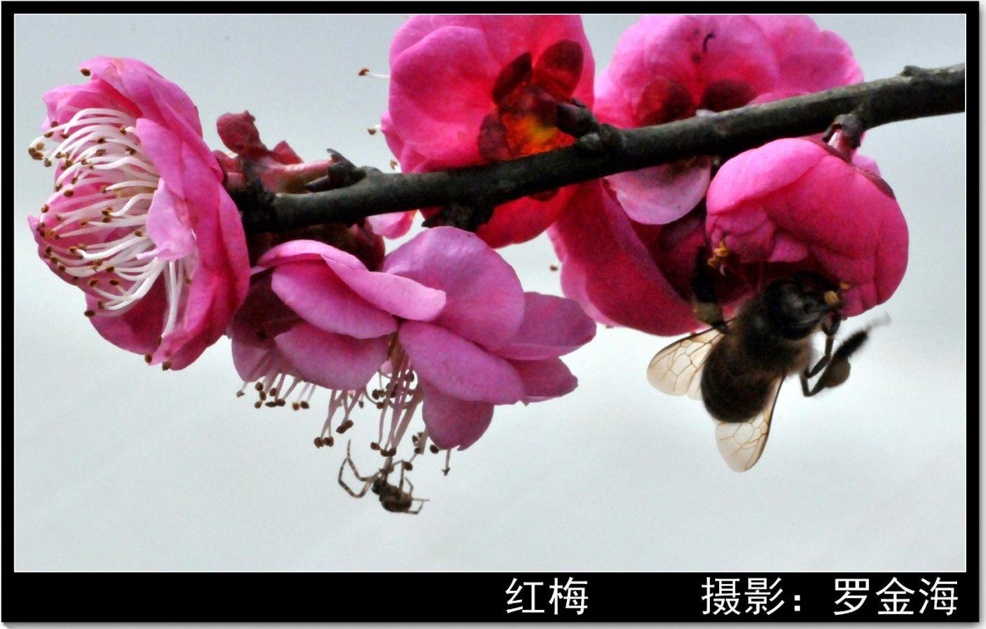 新年赋(古典诗词)_图1-2