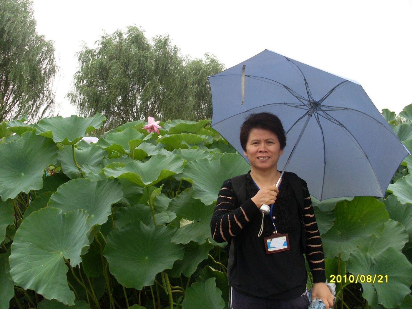 雨中畅游白洋淀_图1-8